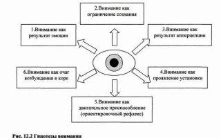 Основные виды и механизмы внимания — справочник студента