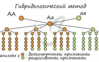 Генетико-моделирующий метод — справочник студента
