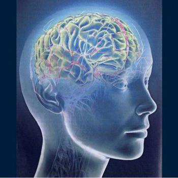 Теории памяти и их особенности - Справочник студента