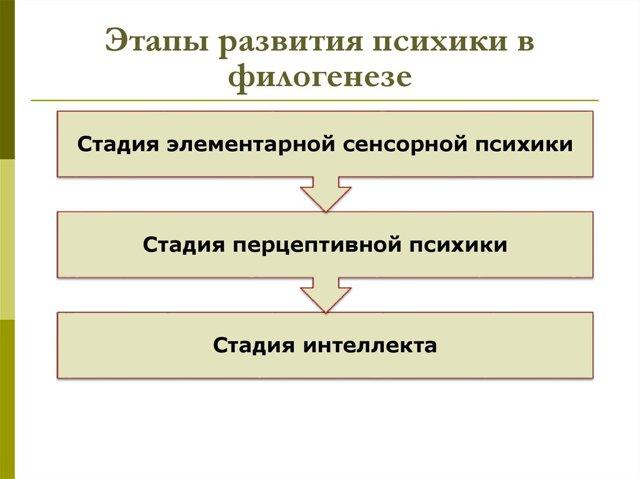 Развитие сознания в филогенезе - Справочник студента
