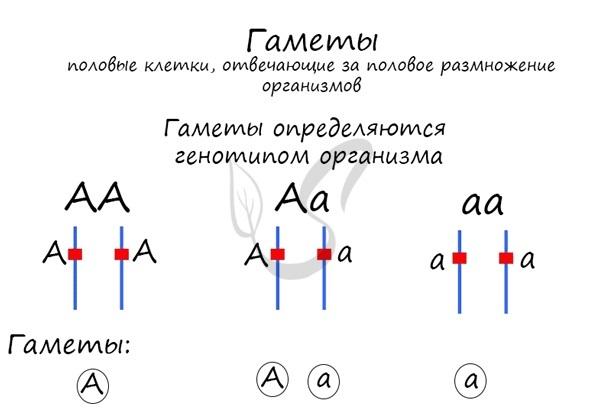 Генетико-моделирующий метод - Справочник студента
