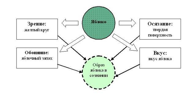 Основные свойства и виды восприятия - Справочник студента